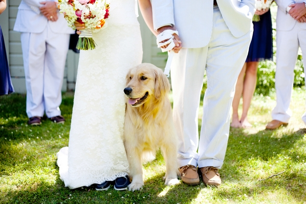 Bride, groom and dog at wedding - Picture by Laura Ivanova Photography