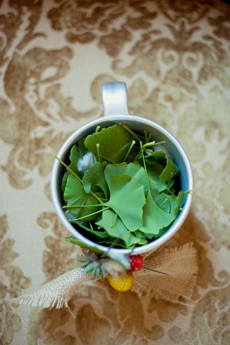 Cup of green leaves - Picture by Rojo Foto Design