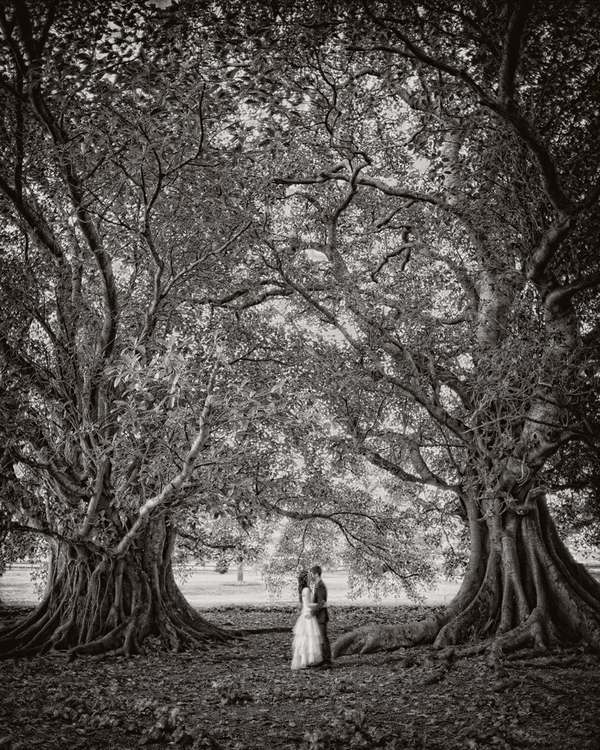 Bride and groom standing inbetween two trees - Picture by Jonas Peterson Photography