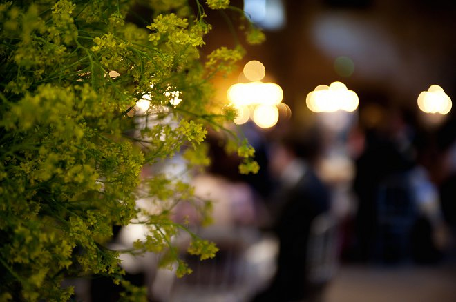 Wedding reception foliage - Picture by Gill Maheu Photography