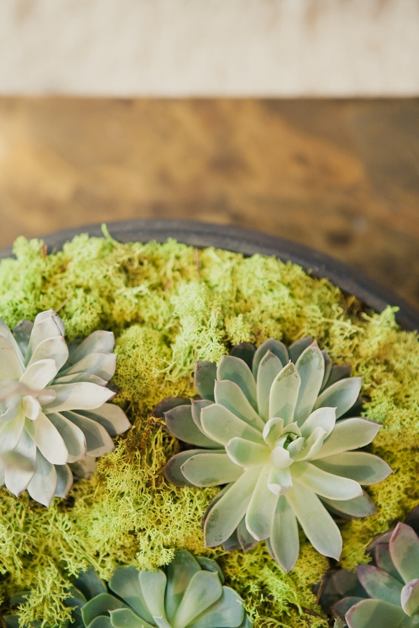 Succulents - Picture by onelove photography