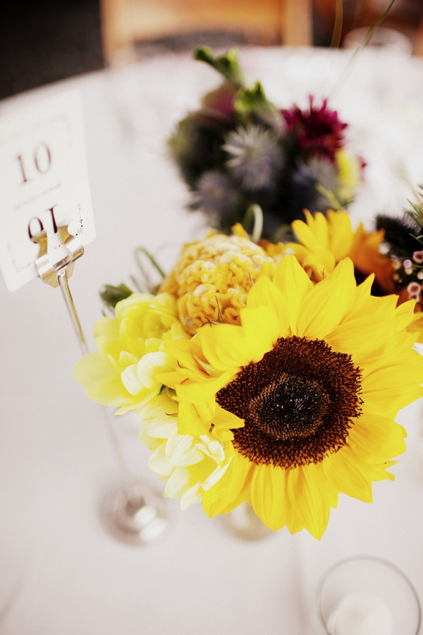 Sunflower - Picture by Judy Pak Photography