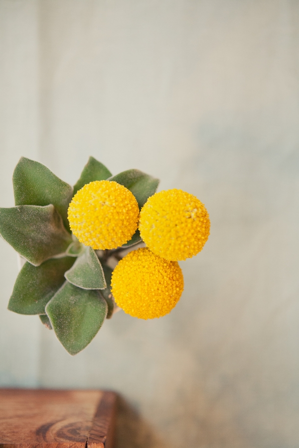 View of yellow succulents from above - Picture by onelove photography