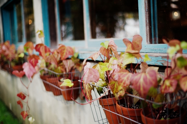 Flowers on window ledge - Picture by Judy Pak Photography