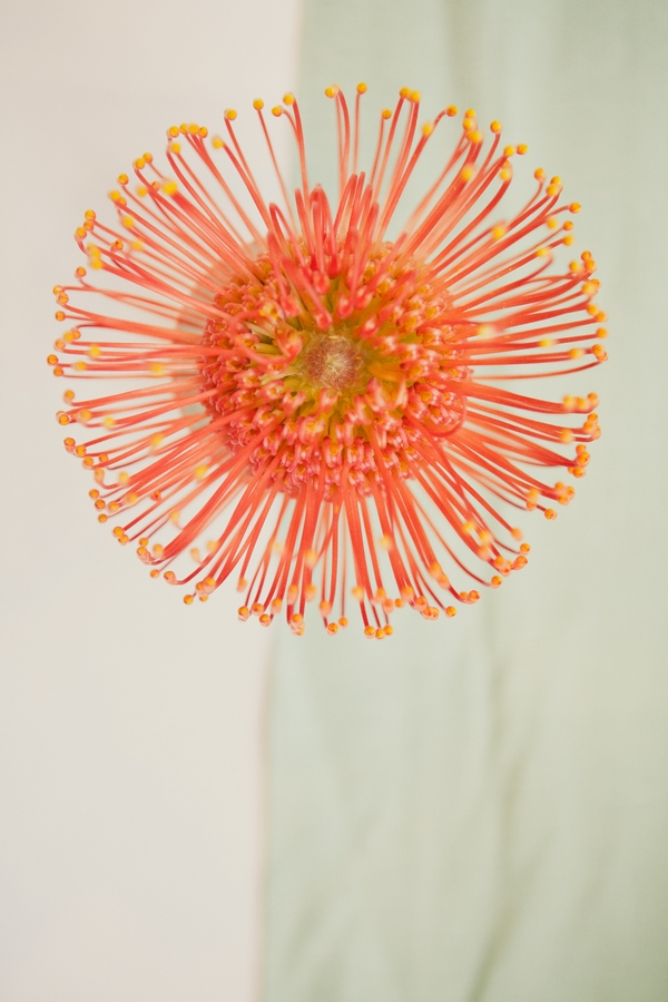 Close up of unusual orange flower - Picture by onelove photography