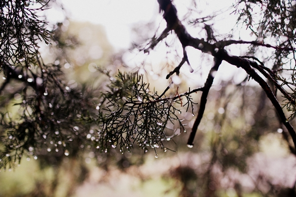 Wet branches - Picture by Judy Pak Photography