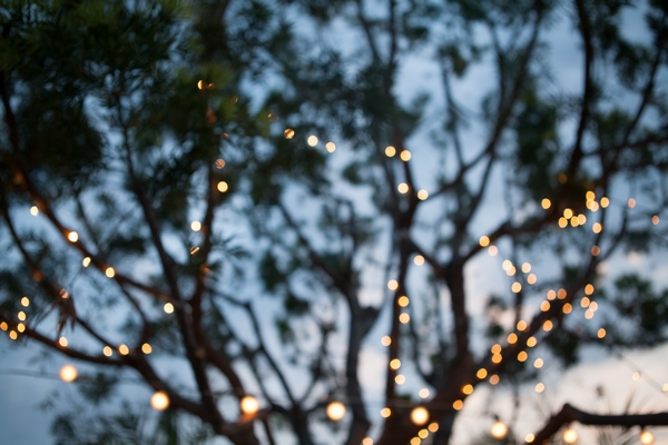 Lights in tree branches