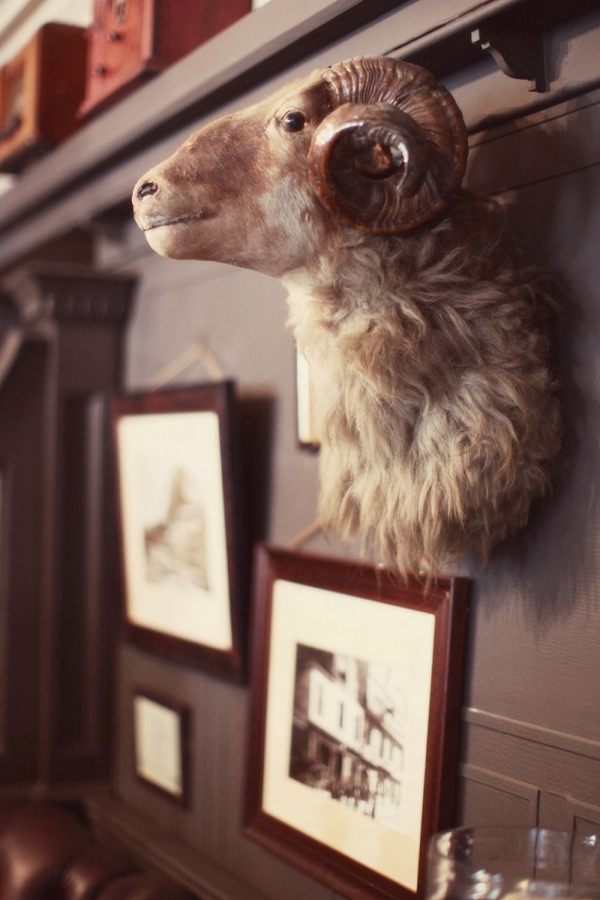 Animal head on pub wall