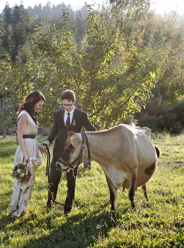 Bride and groom with cow in field
