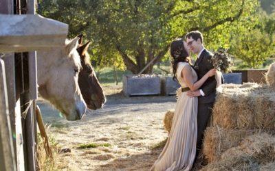 A Simple, Romantic Wedding on an Apple Farm
