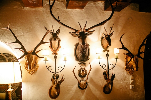 Deer heads on wall