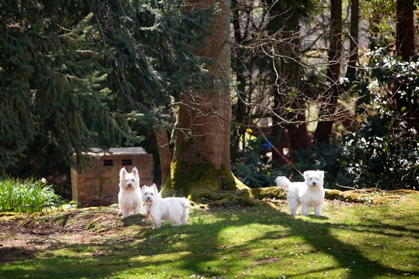 Dogs under a tree