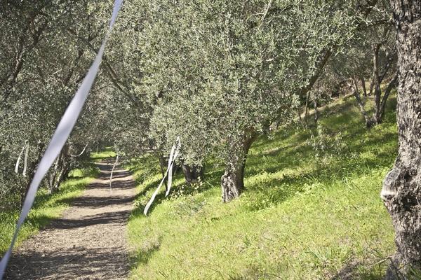 Path to wedding