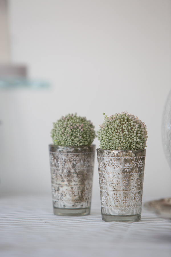 Small pots of succulents
