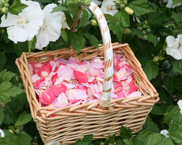 Rose Petal Basket from The Real Flower Petal Confetti Company