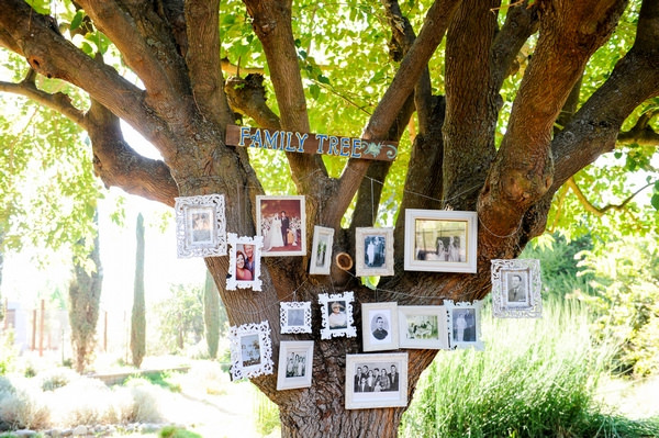 Pictures hanging in tree