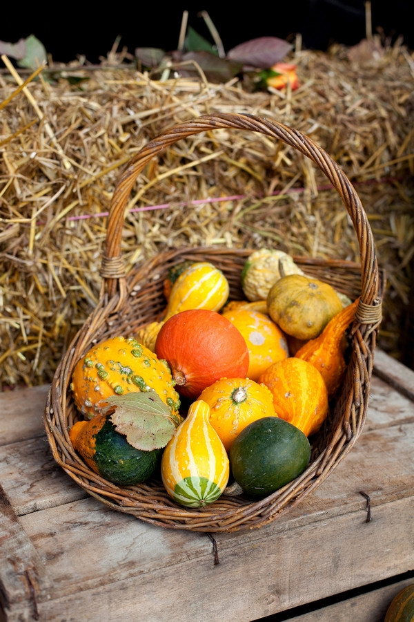 Basket of squash