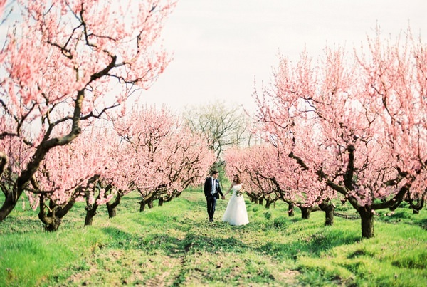 A Romantic Blossom Styled Wedding Shoot