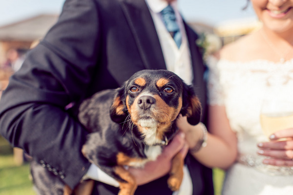 Groom holding dog