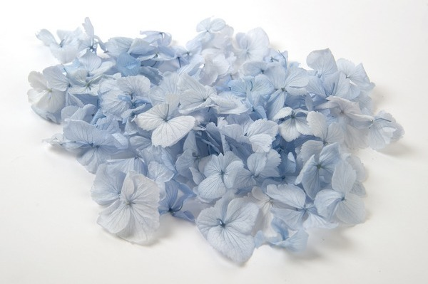 Duckegg Confetti from Shropshire Petals