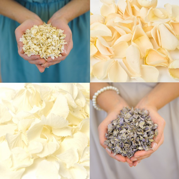 Lady Grey, Icing Sugar, Daisy Daisy and Buttermilk Confetti from Shropshire Petals