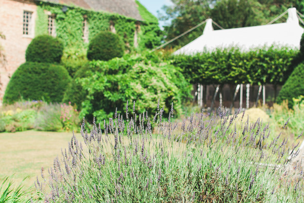 Lavender at Narborough Hall Gardens