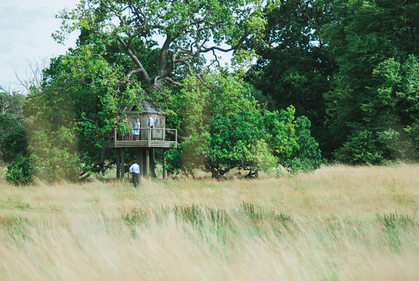 Treehouse at Narborough Hall Gardens