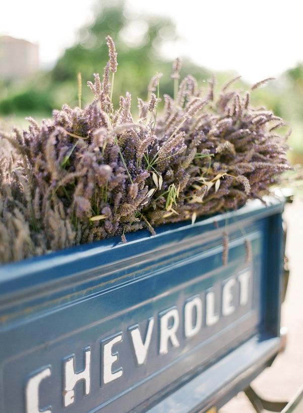 Lavender in back of Chevrolet