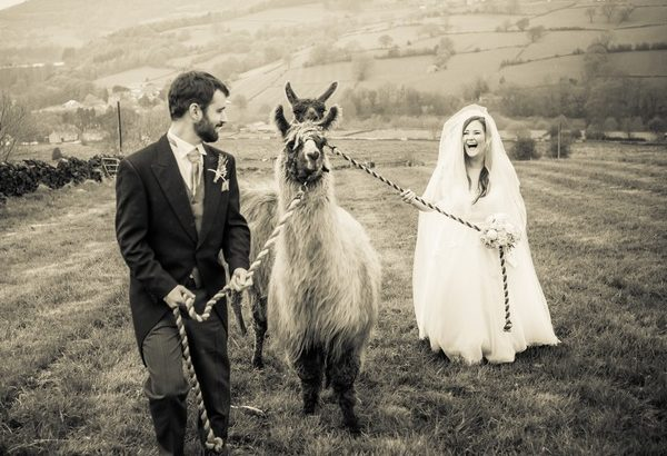 Bride and groom walking with llamas - Picture by PH Weddings