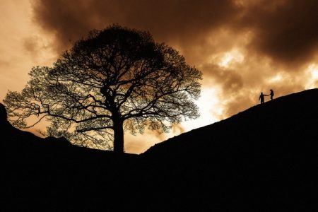 Silhouette of large tree and bride and groom walking down a hill - Picture by Andrew Keher Photography