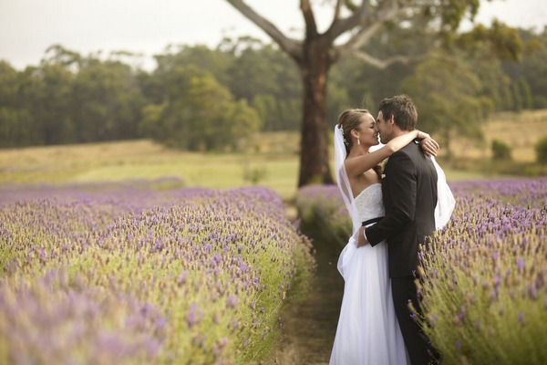 Bride and groom kissing in field of lavender