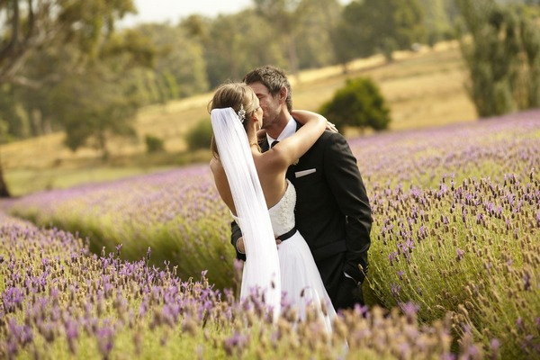 Bride and groom kissing in lavender field