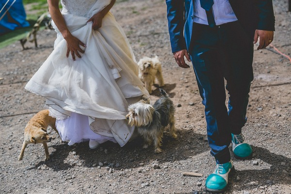 Bride and groom walking dogs