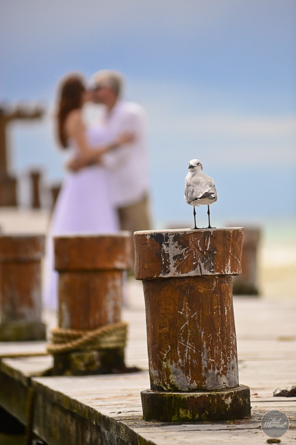 Bird on pillar with bride and groom kissing in background
