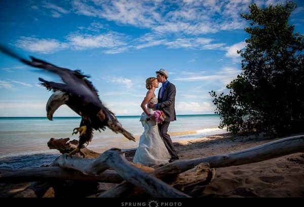 Groom kissing bride on head as eagle lands nearby - Picture by Sprung Photo
