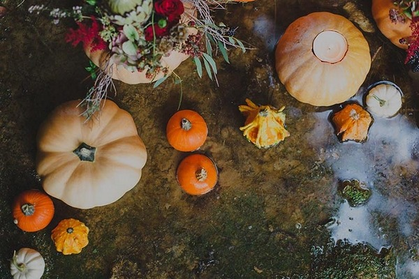 Pumpkins and squashes on ground