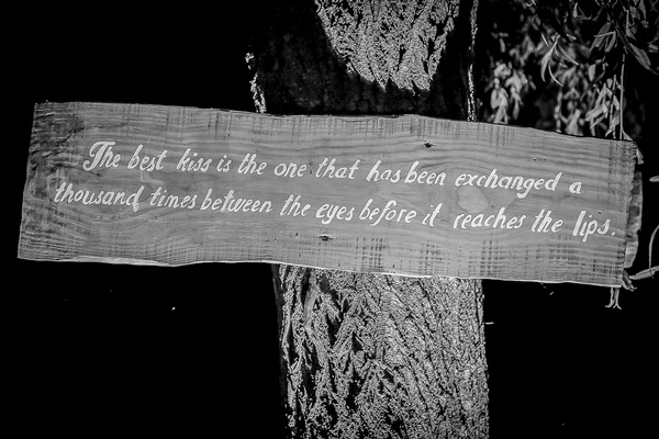 Kiss quote on tree