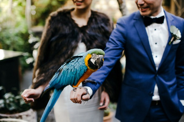 Parrot on groom's hand