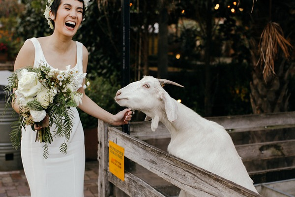 Bride laughing next to goat