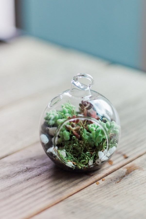 Succulents in glass bauble