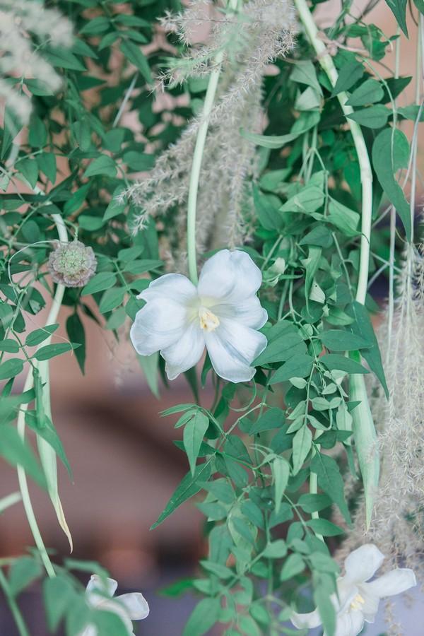 Flower in foliage