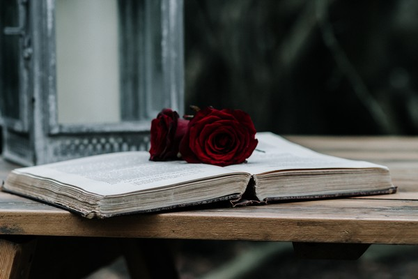 Roses on open book