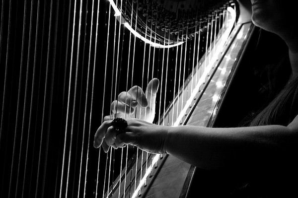 Closeup of Strings on a Harp