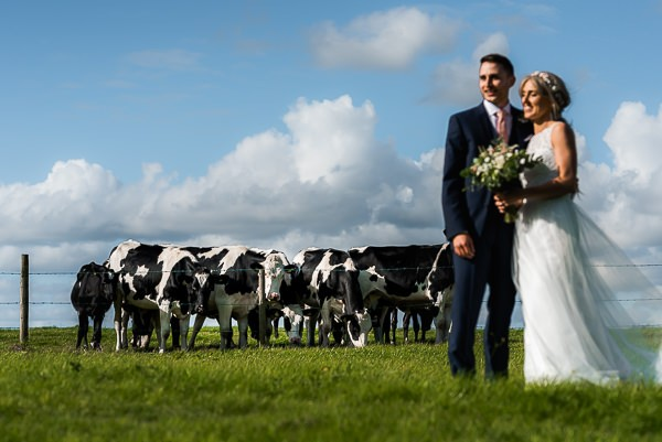 Bride and groom in field with cows in background