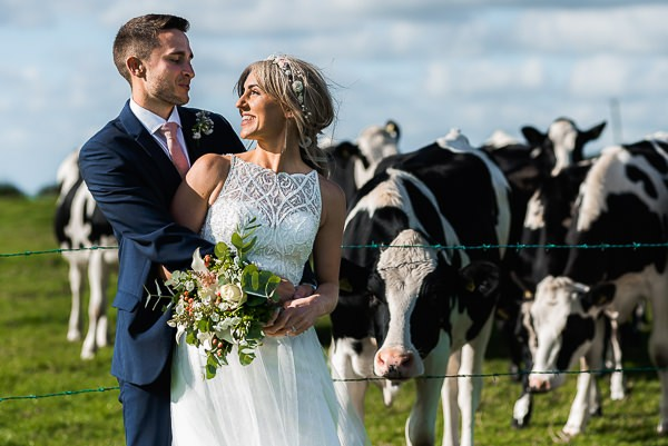 Bride and groom in front of cows