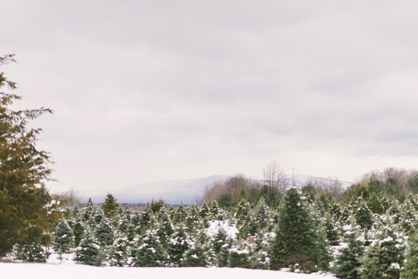 Battenfeld's Christmas Tree Farm