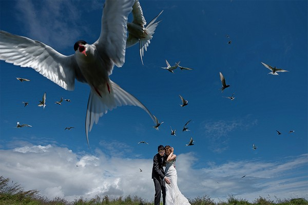 Bride and groom sheltering from birds flying overhead - Picture by 2 of Us Photography