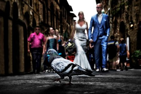 Pigeon with bride and groom in background - Picture by B-Visuals