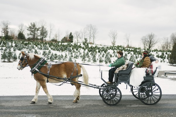 Bride riding in horse and cart