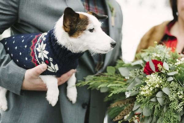 Dog wearing jumper